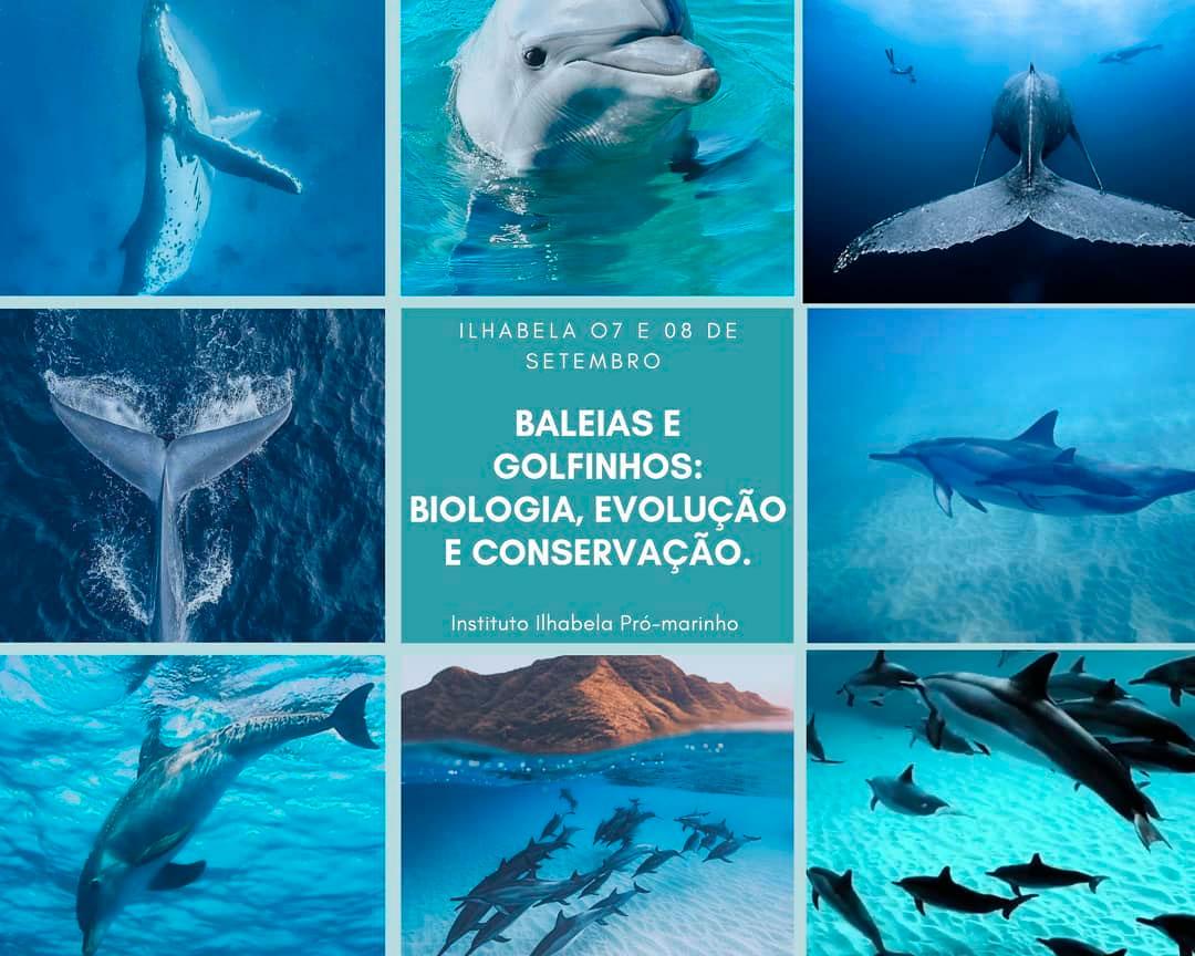 Vivência Azul - Baleias e Golfinhos - Biologia Marinha em Ilhabela