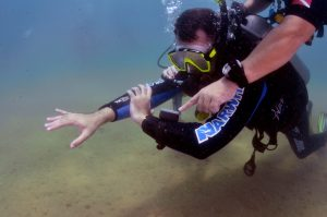 narwhal-mergulho-em-ilhabela-1
