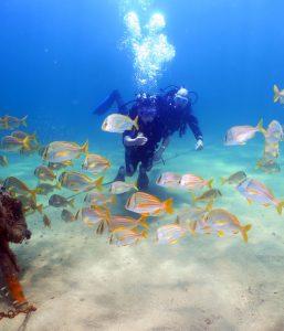 narwhal-mergulho-em-ilhabela-5