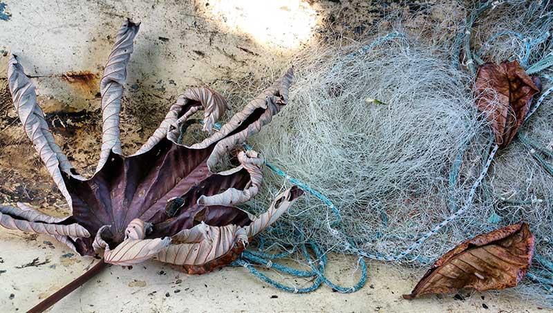 Fishing net - Ilhabela por Estrangeiros | Ilhabela by Foreigners - Diane Hirt, from United States