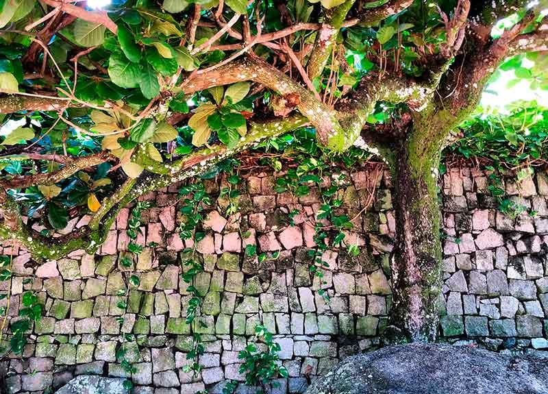 Ilhabela nature - Ilhabela por Estrangeiros | Ilhabela by Foreigners - Diane Hirt, from United States