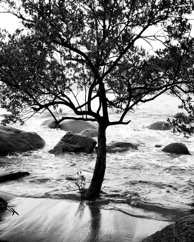Ilhabela PB Nature - Ilhabela por Estrangeiros   Ilhabela by Foreigners - Diane Hirt, from United States