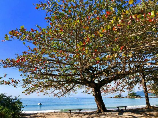 Praia de Castelhanos - Ilhabela no inverno (foto: Acervo Ilhabela.com.br)