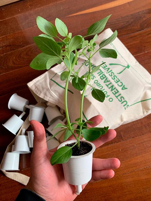 Capsulas da Brota - Horta Inteligente - Ilhabela.com.br