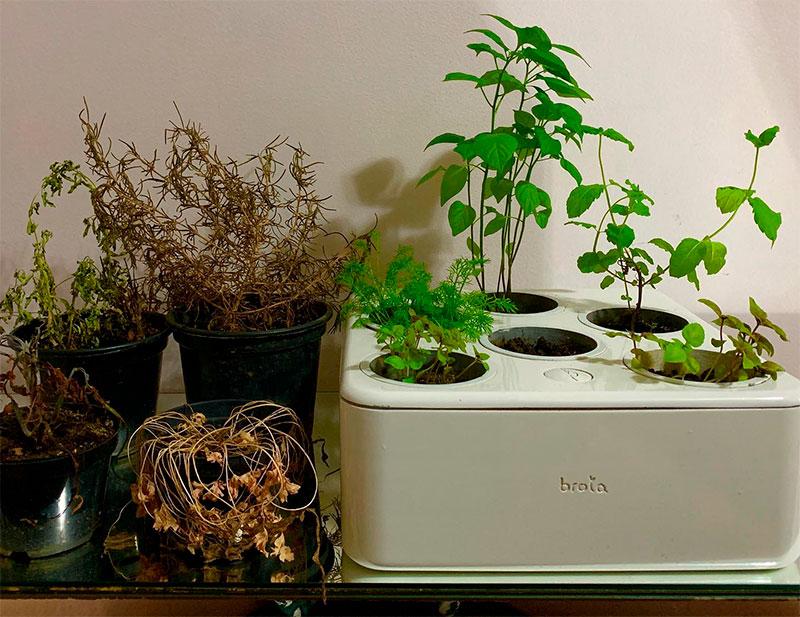 Horta convencional x Horta Inteligente Brota - Ilhabela.com.br