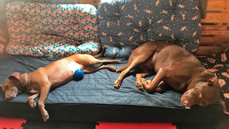 Dogs da Ilha - Hotel Pet em Ilhabela