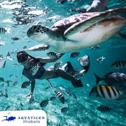 Aquáticos Ilhabela - Mergulhe com peixes em Ilhabela