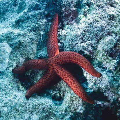 Aquáticos Ilhabela - Mergulhe com vida marinha em Ilhabela